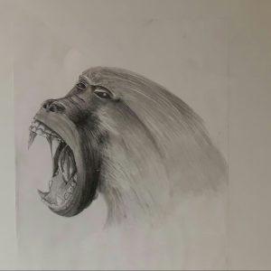 2017-06-Affen01